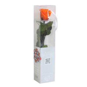Rosa Eterna Naranja Mini